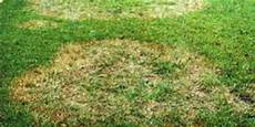 Brown Patch Fungus Brown Patch Fungus For St Augustine Grasses Problem