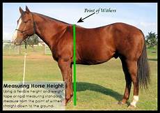 Healthy Horse Weight Chart 8 Best Horse Height Chart Images On Pinterest Height