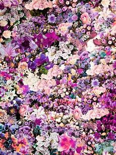 flower arrangements iphone wallpaper a montage of photographic florals ben giles ashkan