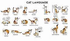 Cat Behavior Chart Cats Varmints 107 Blazing Caribou Studios