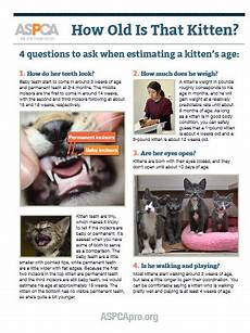 Baby Kitten Age Chart Print Amp Post How To Tell A Kitten S Age Aspca Professional