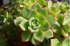 vasi per davanzali coltivare le piante grasse su davanzali e balconi viridea
