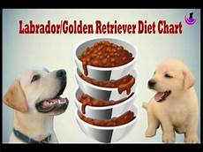 Labrador Puppy Food Chart India Labrador Golden Retriever Diet Chart In Hindi Youtube