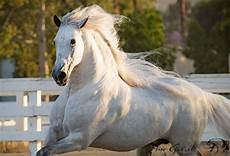bilder pferden im schnee bilder und spr 252 che f 252 r