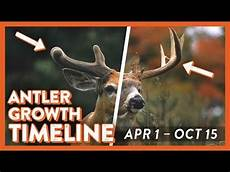 Deer Antler Age Chart Whitetail Deer Antler Growth Timeline Youtube