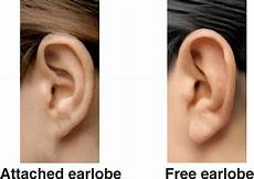Pedigree Chart For Free Or Attached Earlobes There Are Two Types Of Earlobes Attached And Free Swinging