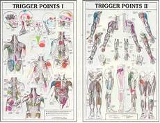 Referred Chart Referred Osteopathy Anatomy In Motion Cranial