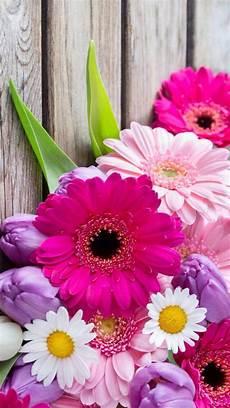flower wallpaper for cell wallpaper iphone gerberas fondos papel pintado flores y