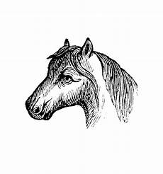 Malvorlage Blaues Pferd Pferde 00023 Gratis Malvorlage In Pferde Tiere Ausmalen