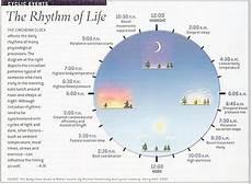 Circadian Rhythm Chart Circadian Rhythm Chart The Rhythm Of Life