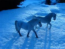 lippizaner andalusier im schnee foto bild tiere
