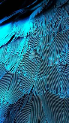 iphone blue feather wallpaper 640x1136 electric blue feathers iphone 5 wallpaper