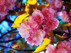 flower wallpaper in hd beautiful flowers wallpapers hd wallpapers