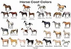 Chestnut Horse Color Chart Different Horse Colors With Pictures Horsebreedspictures Com