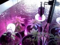 Led Lights Or Hps For Growing Led Grow Lights No Hps Medical Marijuana Pot Cannabis Hemp