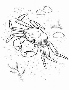 Malvorlagen Unterwassertiere N Malvorlagen Ozean Krabbe