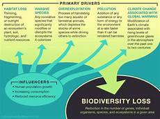 What Effect Does Human Activity Have On Many Ecosystems Biodiversity Loss Causes Effects Amp Facts Britannica