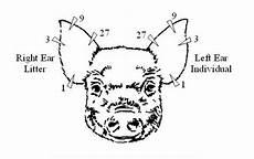 Ear Notch Pig In A Pig S Ear Pairodox