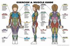 Full Body Anatomy Chart Womens Exercise And Muscle Guide Fitness Workout Anatomy