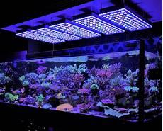 Best Aquarium Lights Aquarium Led Lighting Photos Best Reef Aquarium Led