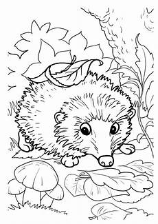 Malvorlagen Herbst Igel Hedgehogs Free Printable Coloring And Activity Page For