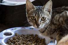 Cat Food Reviews 10 Best Cat Food For Indoor Cats Reviews And Buying Guide