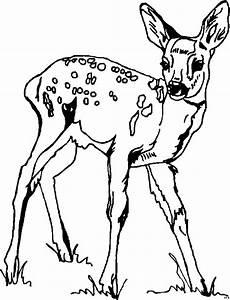 Ausmalbilder Tiere Rehe Reh Im Gras Ausmalbild Malvorlage Tiere
