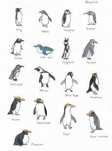Types Of Penguins Chart The Different Types Of Penguins Div Andere Pingu 239 N