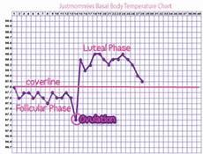 Basal Temperature Women Health Info Blog