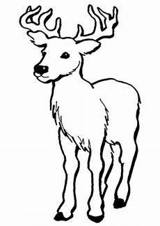 Ausmalbilder Tiere Hirsch Ausmalbild Junger Hirsch Zum Ausdrucken