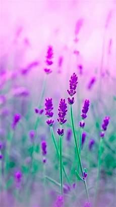 phone flower wallpaper apps iridescent purple flowers wallpaper wallpaper nature
