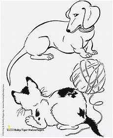 coloring pages of white tigers divyajanani org