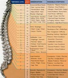 Spinal Levels Chart Spinal Nerve Function Chart Useful Information