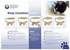 Kitten Eating Chart Pet Obesity Tips For Maintaining A Healthy Weight Karma