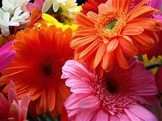 flower images hd wallpapers beautiful flowers hd wallpapers hd wallpapers