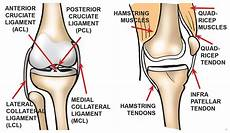 Knees Ligaments And Tendons What Are The Parts Of The Knee Joint Systems4knees