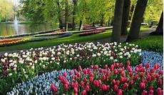 parco fiorito agenzia viaggi gabritour olanda keukenhof il parco