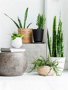 decorating with house plants i green inspiration