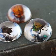 insects cast in easycast clear epoxy resin crafts