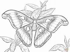 realistic atlas moth coloring page free printable