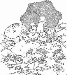 Malvorlagen Herbst Pilze Pilze Im Laub Ausmalbild Malvorlage Blumen