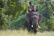 Malvorlage Indischer Elefant Indischer Elefant In Diesen Nationalparks Treffen Sie