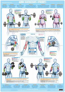 Weight Lifting Exercise Chart Arm Muscles Front Weight Lifting Poster Bodybuilding