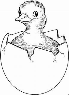 Malvorlagen Gratis Geschluepftes Kueken 3 Ausmalbild Malvorlage Tiere