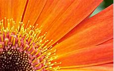 best flower desktop wallpaper 50 awesome wallpapers for your nexus 7 171 android appstorm