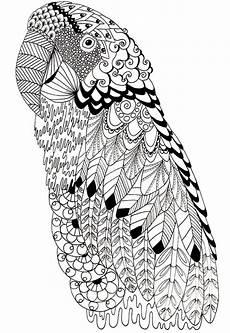 ausmalbilder erwachsene vogel 03 ausmalbilder f 252 r erwachsene