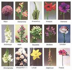 Flower Chart With Names And Pictures Flowers For Flower Lovers Flowers Names