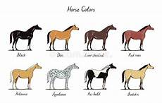 Chestnut Horse Color Chart Horse Color Chart Set Equine Coat Colors With Text Types