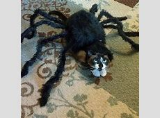 18 Of The Cutest, Most Terrifying Cat Costumes For