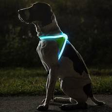 Dog Led Light Noxgear Lighthound Illuminated Dog Vest Fancy Com